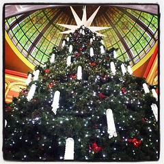 One of Sydney's tallest #Christmas trees... (1000heads) Tags: christmas qvb uploaded:by=flickstagram instagram:venue=590348 instagram:photo=598157528093307435462463723 instagram:venuename=queenvictoriabuilding28qvb29