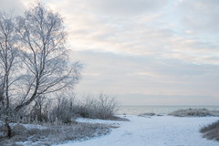 Frosty by the Sea (Infomastern) Tags: winter cold vinter frost rime geolocation beddingestrand rimfrost kallt geocity camera:make=canon exif:make=canon geocountry geostate exif:lens=efs18200mmf3556is exif:aperture=56 exif:focallength=35mm exif:isospeed=100 camera:model=canoneos760d exif:model=canoneos760d