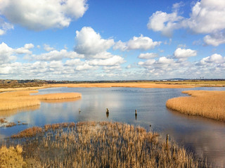 2016-366 049 The Lake at Farlington Marshes