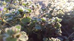 20160312_071016 (ageorgiev98) Tags: morning sun green sunrise frozen spring fresh contra пролет трева contrejoure зелено
