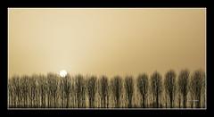 CHOPERA y SOL (Juan J. Marqués) Tags: luz sol árboles atardeceres amarillos líneas verticales