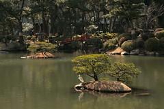 IMG_0463_2 (downatthezoo) Tags: hiroshima shukkeiengarden