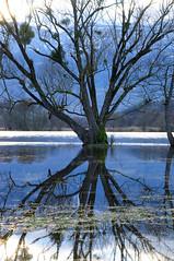 Haut niveau, au niveau (Pierrotg2g) Tags: blue lake alps tree nature alpes landscape nikon lac savoie paysage arbre d90