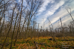 Waterloo open field (eppelsauce3966) Tags: sky nature clouds landscape woods nikon tokina waterloo 1116mm d7000