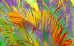 tree feathers (nolleone--Nol, like Christmas) Tags: california abstract hot leaves design colorful pattern desert feathers tropical cycad lotusland hss treefeathers happyslidersunday postprocessedtothemax