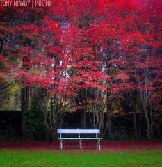 IMG_6079_80_81_tonemapped (newbs216) Tags: autumn trees landscape hdr mtwilson