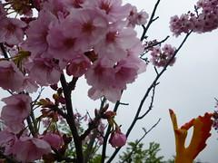 Moltres in Yokosuka, Kanagawa 32 (Kannonzaki park) (Kasadera) Tags: toys figure pokemon pokémon yokosuka 横須賀 神奇寶貝 ポケモン lavados 観音崎公園 moltres 火鳥 ファイヤー pokemonkids 寵物小精靈 파이어 kannonzakipark sulfura ポケモンキッズ 火焰鳥