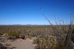 Valley View at Saguaro National Park, Arizona (mattk1979) Tags: park flowers red arizona usa desert tucson unitedstatesofamerica national saguaro signalhill ocotillo bajadaloopdrive