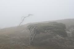 Windblown (Ian@NZFlickr) Tags: trees wind nz otago dunedin peninsula stressed windblown blown sandymount