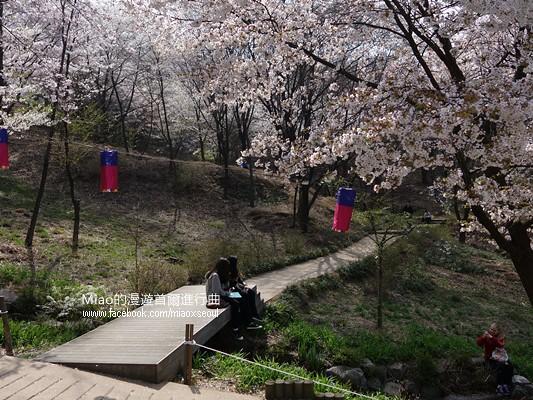 안산공원벚꽃20
