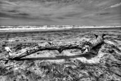 Il relitto - The wreck (Pablos55) Tags: sea sky bw beach mare waves bn cielo trunk wreck tronco spiaggia onde relitto