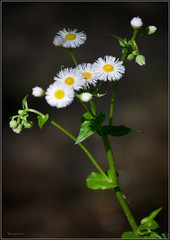 (Cliff Michaels) Tags: flowers photoshop spring nikon tennessee april maryville d5000 pse9