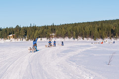 DSC_8259 (Adventurin') Tags: dog sweden stockholm aurora lapland sledding kiruna nothernlights