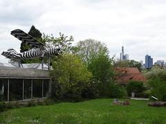Frankfurt zoological garden (fchmksfkcb) Tags: animals germany deutschland zoo tiere hessen frankfurt frankfurtammain frankfurtmain hesse ffm frankfurterzoo hessia zoofrankfurt