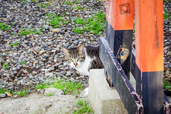 Today's Cat@2016-04-18 (masatsu) Tags: cat pentax cc100 catspotting mx1 thebiggestgroupwithonlycats