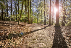 The path (Flydirector) Tags: nature netherlands forest trekking woods track path natura hague trail sentiero footpath inspiring olanda bosco foresta ispirazione