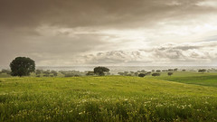 Blooming Meadows (parkerbernd) Tags: flowers mist green portugal nature rain clouds landscape nationalpark spring haze blossom pano meadow explore bloom endless lumixgx1 bloomingmeadows