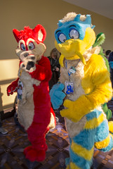 _DSC9769 (Acrufox) Tags: midwest furfest 2015 furry convention december hyatt regency ohare rosemont chicago illinois acrufox fursuit fursuiting mff2015