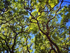 Looking up the trees (harminder dhesi photography) Tags: california park trees green nature landscape outdoors spring view angle hiking sonoma perspective bayarea sonomacounty norcal s3 glenellen vsco snapseed vscocam