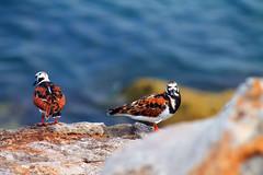 Nature (HectorVaM) Tags: sea beach mexico outdoor playa aves tamaulipas miramar