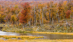 Bosque de Otoo (Marcelo Las Heras) Tags: trees patagonia fall colors forest landscape tierradelfuego landscapes arboles paisaje colores bosque otoo