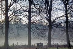 DSCF7489.tif (Ad Sebregts) Tags: fog forest margriet