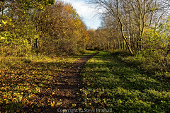 Well trodden path (Steve Bramall) Tags: trees red england sky greenleaves brown sunlight clouds gold shadows unitedkingdom peaceful bluesky gb footpath brownleaves countrypark lateautumn parksandgardens lightcloud bestwoodcountrypark bestwoodvillage copyrightstevebramall