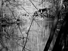 Winter reflections (pilechko) Tags: blackandwhite water monochrome creek branches pa newhope selectivefocus