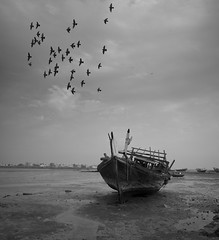 Leviathan in Flight (heshaaam) Tags: bw fly flying bahrain pigeons flight dhow arad muharraq