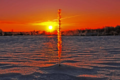 ''MORNING GOLD '' (Hans J Fischer) Tags: morning winter sculpture canada cold macro art classic ice water beautiful alaska silver reflections photography golden frozen colorful frost crystals natural outdoor vibrant rich vivid surreal arctic chilling yukon glowing northern icicles stricking
