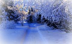 Walking in a Winter Wonderland (JLS Photography - Alaska) Tags: trees snow art alaska forest landscape landscapes artwork scenery artistic outdoor path digitalart serene digitalmanipulation cabinlife alaskalandscape jlsphotographyalaska