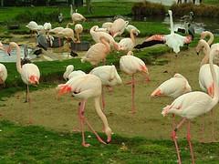 Husch husch Kinder -  fertig machen   Die  Flickr Fotografen sind bald da! (eagle1effi) Tags: heron funny flickr photos stuttgart flamingo powershot 60 stork hs beste sx wilhelma damncool caonon sx60 funsshot wilhelmazoologischbotanischergarten sx60best