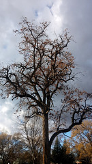 Interesting Tree (draeighean) Tags: park winter tree back cool interesting bare branches idaho boise leafless camels twisted twisting