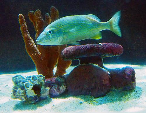 Greater Cleveland Aquarium 01-22-2015 - Unknown Fish 29