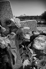 Crucifixion with Flowers (RMGphotos) Tags: statue mexico religious shrine catholic desert faith religion jesus statues mexican bajacalifornia catholicism shrines fakeflowers religions deserts crucifixion jesuschrist crucified vizcaino catholics sonofgod roadsideshrine