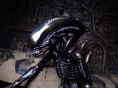 Alien Close Up (ridureyu1) Tags: toy toys actionfigure alien aliens kaiyodo xenomorph toyphotography revoltech jfigure sonycybershotsonycybershotdscw690
