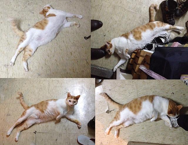 家裡來了一隻貓