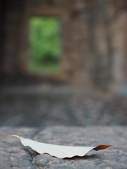 Prasat Ta Meuan Khmer Temple Ruins Surin Isaan Thailand © (hn.) Tags: copyright leaves thailand temple leaf asia asien heiconeumeyer seasia soasien southeastasia südostasien khmer laub deadleaves ruin ruine blatt northeast blätter isaan tempel ruinen surin isan copyrighted esan issan deadleaf esarn northeastthailand isarn prasat nordost khmerruins laubblatt templeruin surinprovince nordosten issarn tempelruine nordostthailand upcountrythailand prasattameuan khmerera khmereratemple provincialthailand chanwatsurin tp201516 prasattameuanproper1sttoreachnorthernmost prasattamuan prasattamuen tameuan tamuan tamuen