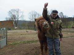 R0026481 (joachimelbing) Tags: mit lustig yoyo spielen pferden yoyogame