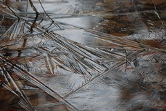 DSC_3800 (photodittmer) Tags: winter abstract cold ice lines sharp vernalpool iceflowers