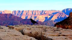 Grand Canyon, Arizona (Daphne's Escapades) Tags: sunset arizona cold nature grandcanyon northamerica grateful magnificent beautifulcreation