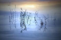 Quietud (Inmacor) Tags: blue sunset naturaleza sunlight lake planta nature water azul reflections landscape lago atardecer agua plantas paisaje calma reflejos serenidad quietud almenara ltytr1 inmacor bestcapturesaoi elitegalleryaoi