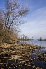 DSC_4798 (kabatskiy) Tags: city urban lake nature landscape spring dump minimal marsh abstracts
