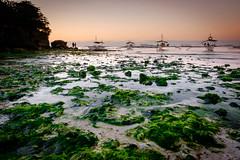 Morning sunrise with green algae (Hendraxu) Tags: morning sea green beach sunrise boats dawn boat seaside sand flora asia philippines algae seashore