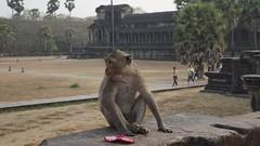 Angkor Monkey (picturesfrommars) Tags: monkey cambodia kambodscha siem reap angkor wat affe a6000 sel35f18