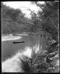 In Gibberagong Creek, looking up creek from station, Ku-ring-gai Chase National Park (NSW State Archives and Records) Tags: blackandwhite archives kuringgaichasenationalpark staterecordsnsw