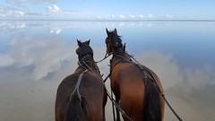 View from the wagon (Jaedde & Sis) Tags: sky horse reflection water wagon phone view horizon behind infocus highquality unanimous 15challengeswinner challengefactorywinner thechallengefactory herowinner fuglefotokursuspmandmedlarsgejl