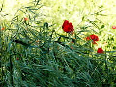 Flowers (tatiana.minori) Tags: park italy rome travelling architecture landscapes travels ruins outdoor natur places ancientrome