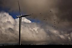 propellar dodging (Jamie B Ernstein) Tags: newzealand sky panorama clouds landscape nikon ducks windmills waikato northisland sillouette windfarm paradiseducks