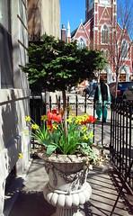 Greenpoint, Brooklyn, NY (lotos_leo) Tags: urban ny newyork brooklyn spring outdoor greenpoint